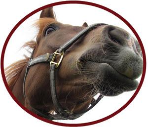 Försäkra din häst