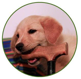 hundvalp som behöver försäkring
